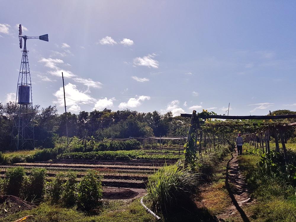 Farmspiration Farms